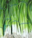 Выращивание лука дома