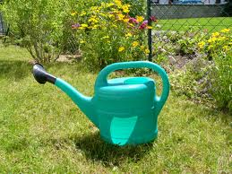 Правила полива растений