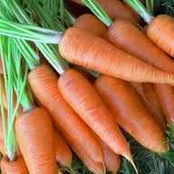 Способы правильного хранения моркови