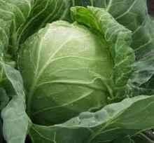 рецепты заготовок из капусты