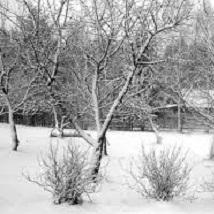 Подмерзание корней