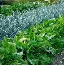 Совместное выращивание растений на участке