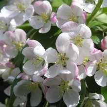 Цветущий сад фото