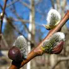 Календарь садовода на апрель