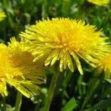Фото растения защитники