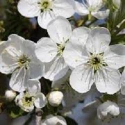 Календарь садовода на май