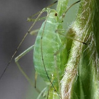 Борьба с тлей на растениях