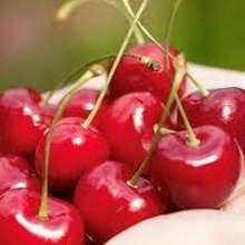 заготовки из вишни