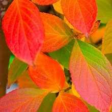 Листья как удобрение фото