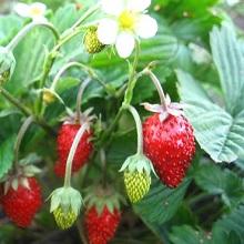 Уход за плодовым садом