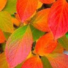 Осенняя перекопка