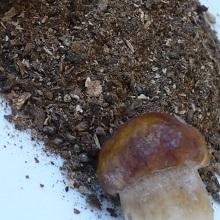 Заготовки из грибов и овощей