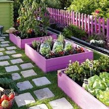 Чередование посадки овощей