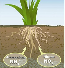 недостаток азота в почве