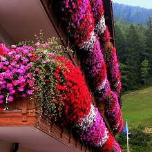 Балконное цветоводство