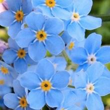 Двухлетние цветы