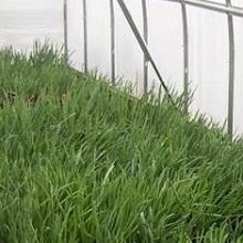 Технология выращивания зелени в теплице