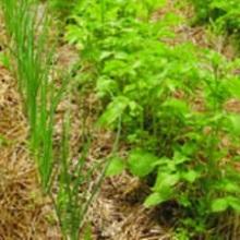 Защита огорода от вредителей