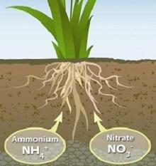Азотные подкормки растений