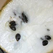 Плоды тыквы фиголистной
