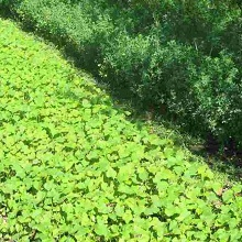 Защита растений от ветра