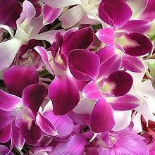 Почему не цветет орхидея, а листья растут