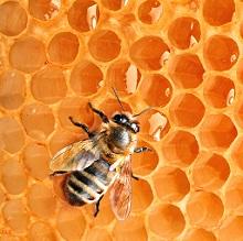 Как правильно хранить мед дома
