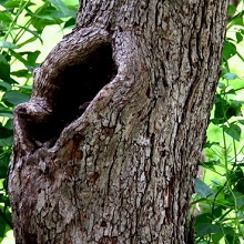 Лечение поврежденных плодовых деревьев