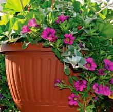 Подкормки контейнерных растений