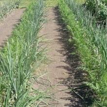 Метод выращивания по митлайдеру