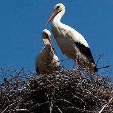 Как сделать гнездо для аиста