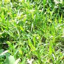 Настой из сорняков