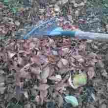 Уборка листьев в саду осенью