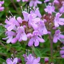 Растения которые отпугивают насекомых