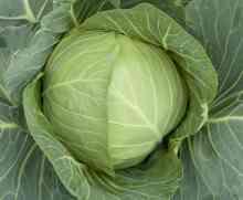 Народные средства борьбы с вредителями капусты