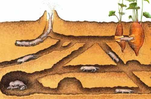 Схема кротовой норы