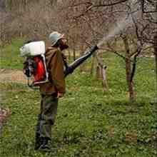 Осенняя обработка яблонь от парши