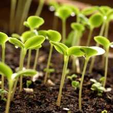 Способы стратификации семян