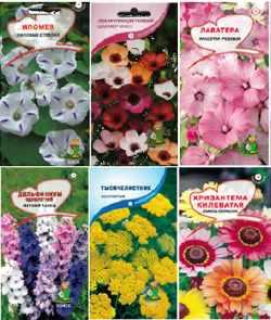 Подготавливаем семена цветов к посеву