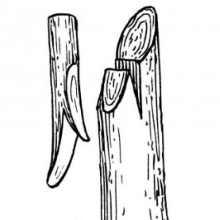 Улучшенная копулировка яблони буквой Г