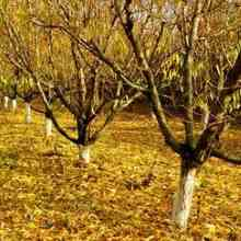 Как и чем подкормить сад осенью
