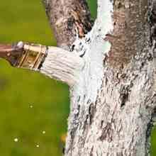 Чем замазать рану на дереве