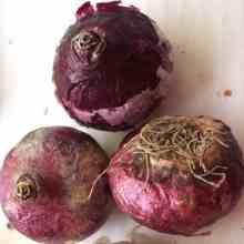 Луковицы гиацинтов для посадки в октябре