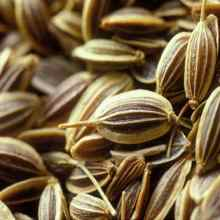 Секреты подзимнего посева семян