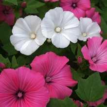 Каким семенам цветов нужна стратификация