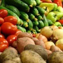 опыт выращивания овощей