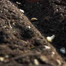 Нормы посева семян
