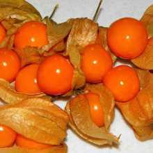 Физалис плоды в чешуе