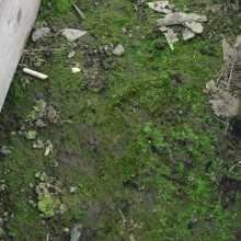 Почему зеленеет почва в теплице