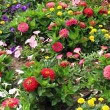 Какие низкорослые цветы посадить на клумбе